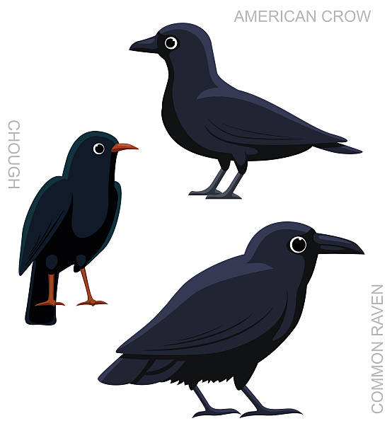 American Crow clipart #9, Download drawings