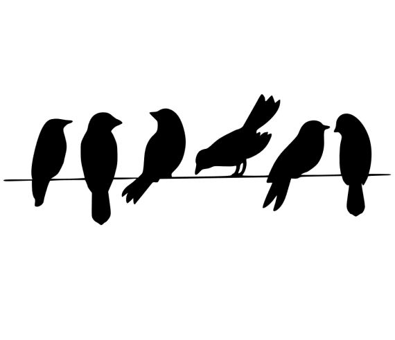 Pied Crow svg #7, Download drawings