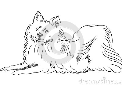 American Eskimo Dog clipart #10, Download drawings