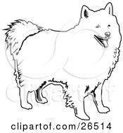 American Eskimo Dog clipart #19, Download drawings