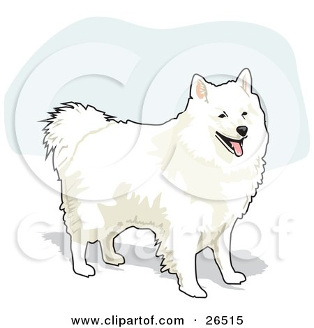 American Eskimo Dog clipart #5, Download drawings