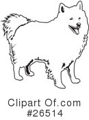 American Eskimo Dog clipart #17, Download drawings