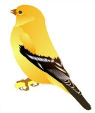 American Goldfinch clipart #20, Download drawings