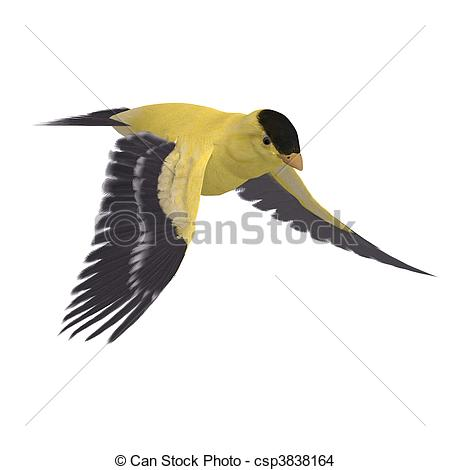 Goldfinch clipart #3, Download drawings