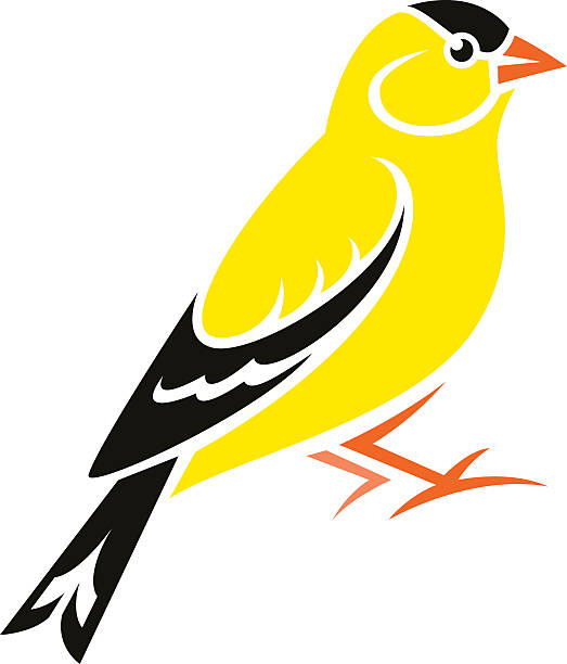 American Goldfinch clipart #12, Download drawings
