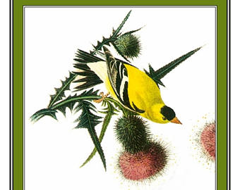 American Goldfinch svg #1, Download drawings