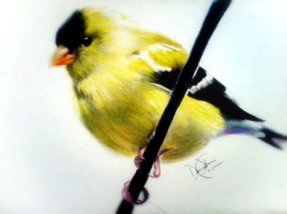 American Goldfinch svg #12, Download drawings