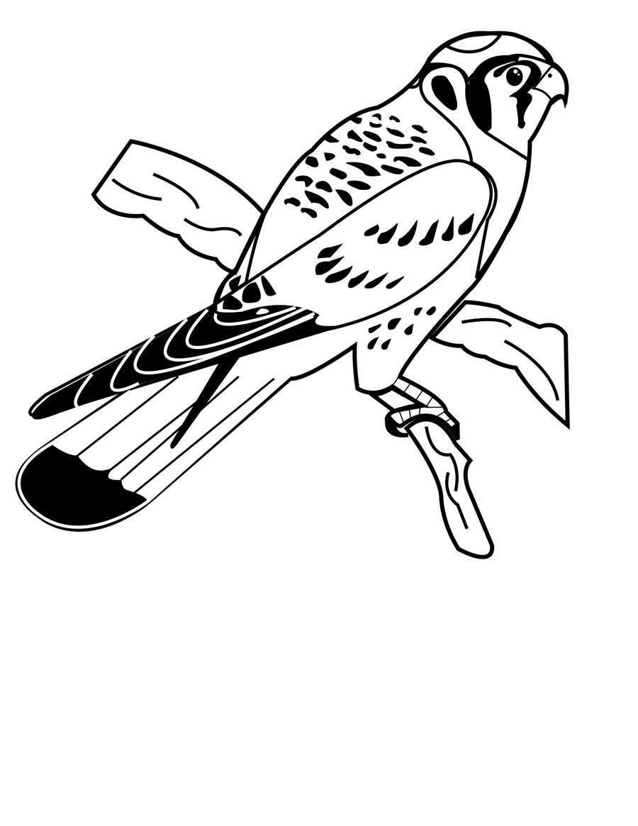 American Kestrel clipart #8, Download drawings