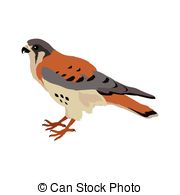 Kestrel clipart #2, Download drawings
