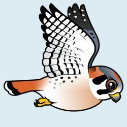 American Kestrel clipart #12, Download drawings