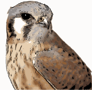 American Kestrel clipart #9, Download drawings