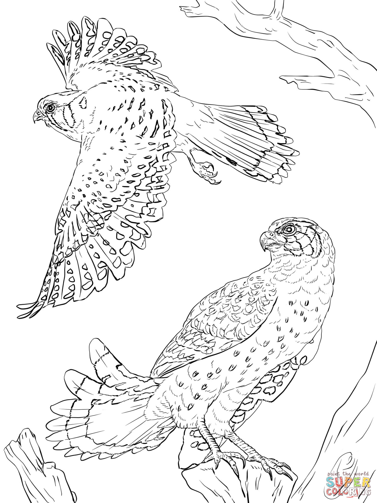 Peregrine Falcon coloring #17, Download drawings