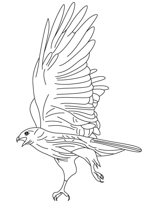 Kestrel coloring #5, Download drawings
