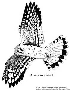 Kestrel coloring #4, Download drawings