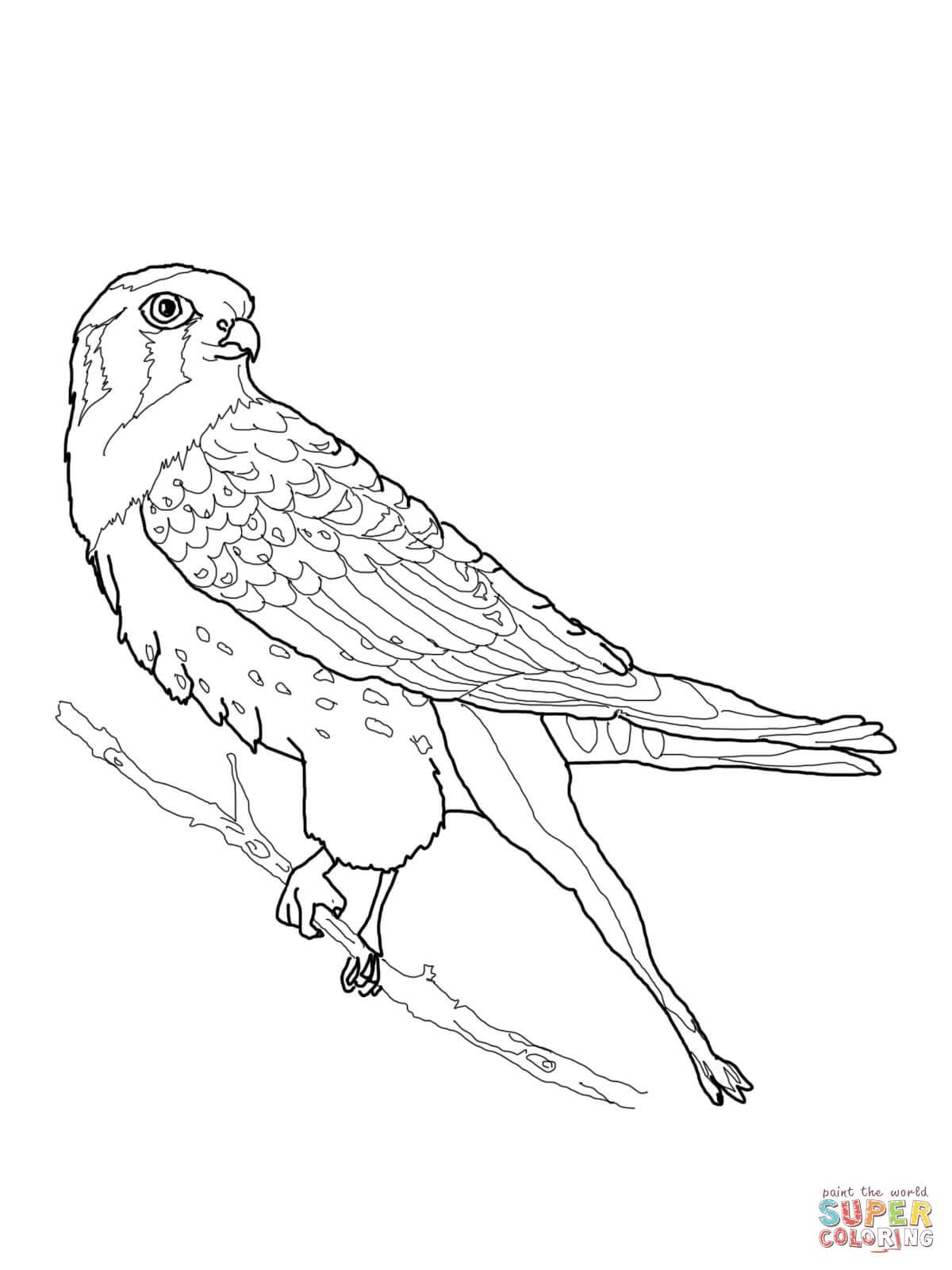 Kestrel coloring #12, Download drawings