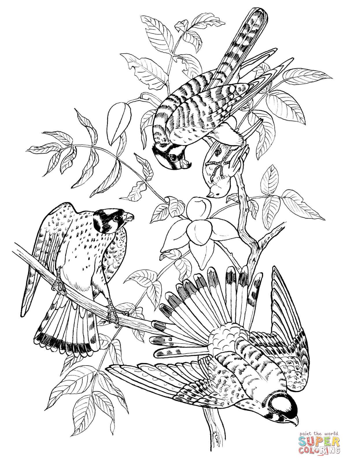 Kestrel coloring #7, Download drawings