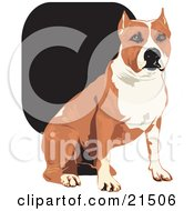 American Pit Bull Terrier clipart #7, Download drawings