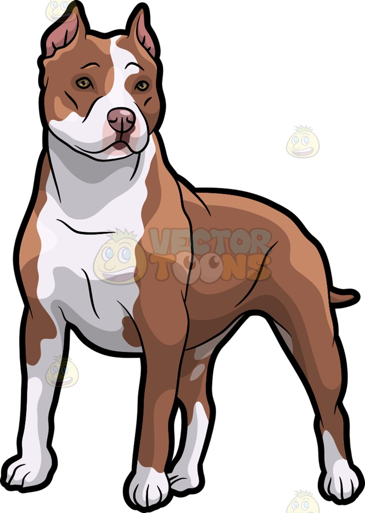 American Pit Bull Terrier clipart #6, Download drawings