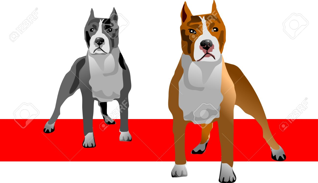 American Pit Bull Terrier clipart #5, Download drawings