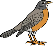 American Robin clipart #1, Download drawings