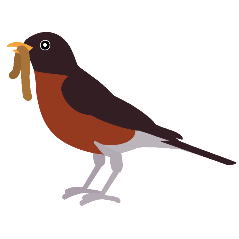 American Robin clipart #20, Download drawings