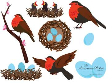 American Robin clipart #9, Download drawings