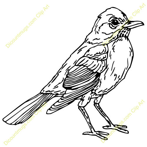 American Robin clipart #19, Download drawings