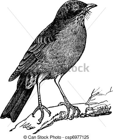 American Robin clipart #14, Download drawings