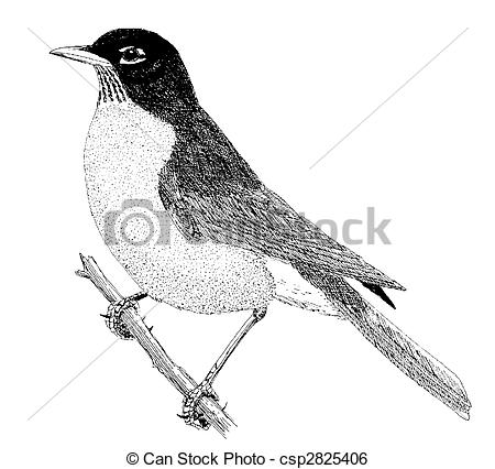 American Robin clipart #16, Download drawings