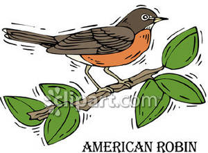 American Robin clipart #15, Download drawings