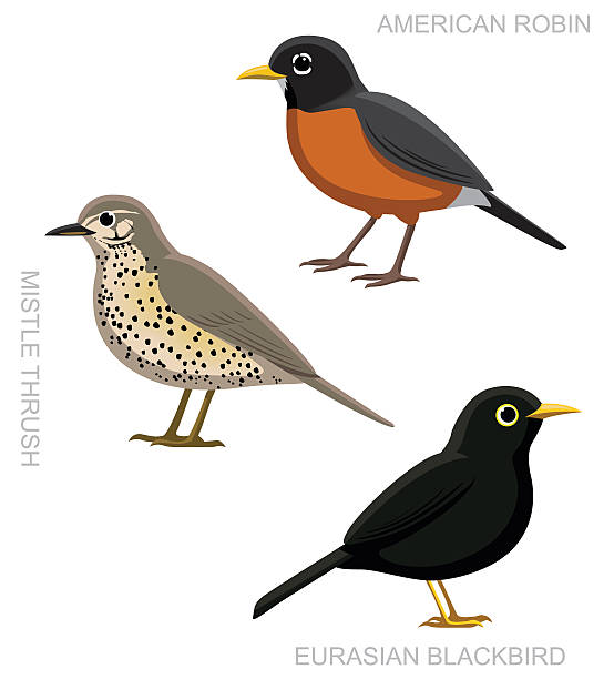 American Robin clipart #11, Download drawings