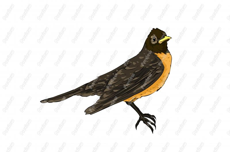 American Robin clipart #3, Download drawings