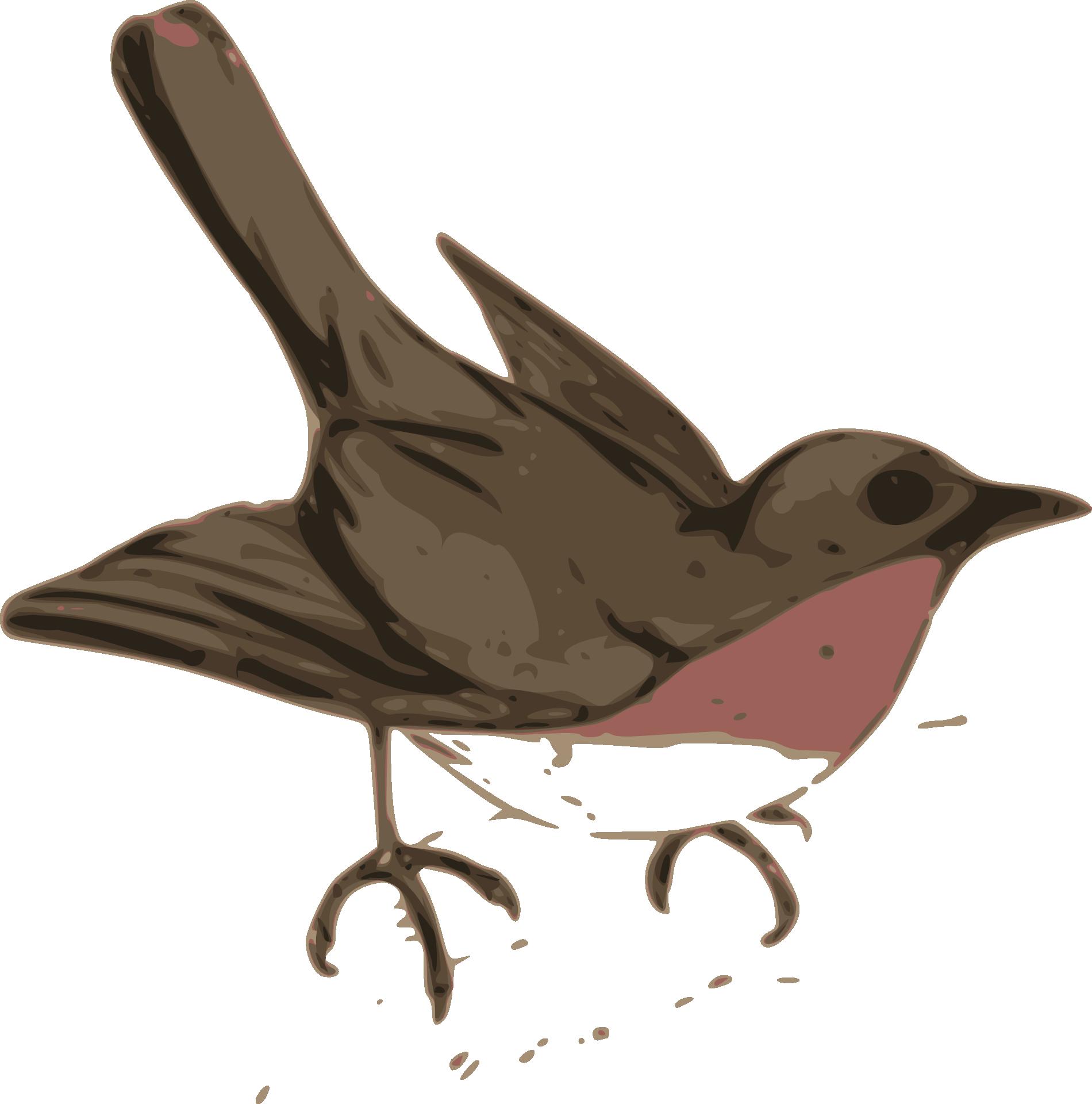 American Robin svg #11, Download drawings