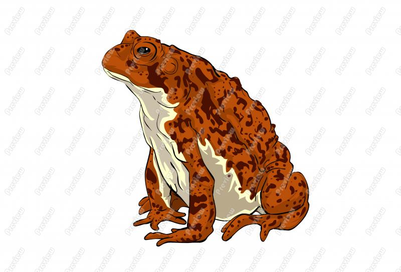 American Toad clipart #20, Download drawings