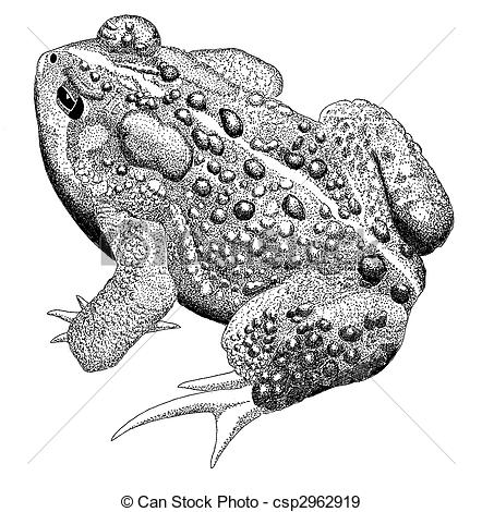 American Toad clipart #14, Download drawings