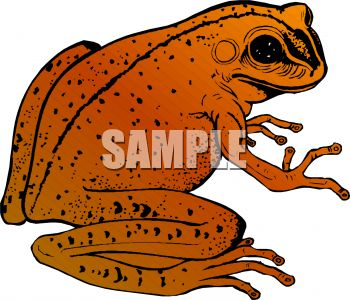 American Toad clipart #1, Download drawings
