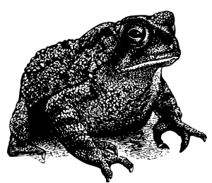 American Toad clipart #7, Download drawings