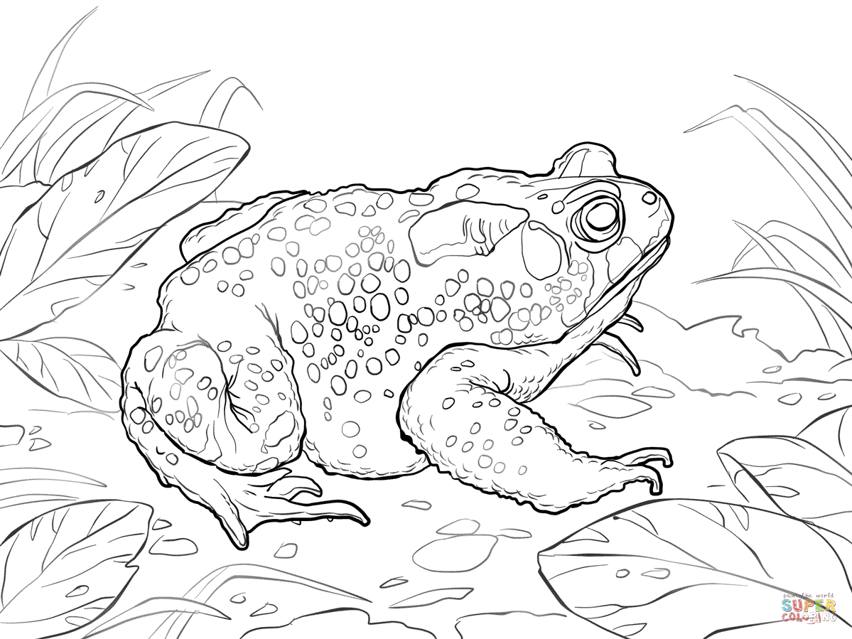 American Toad coloring #8, Download drawings