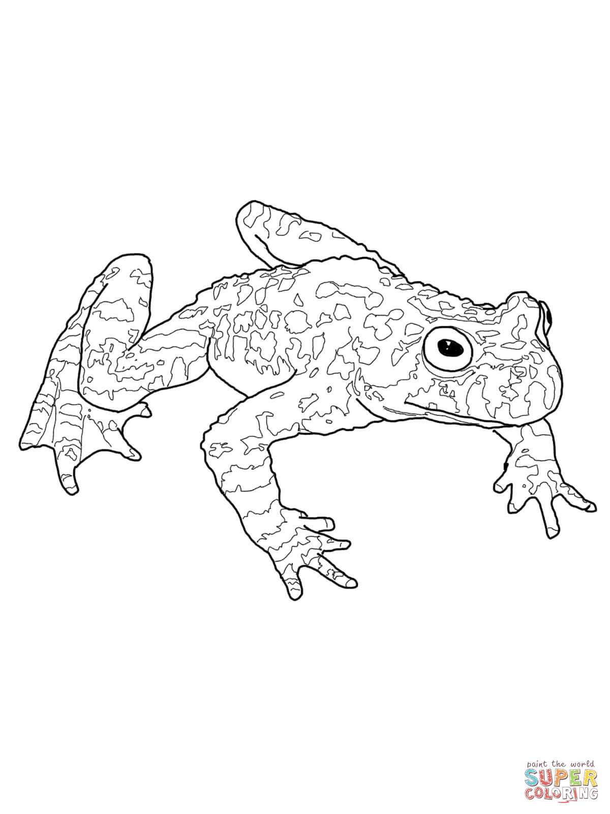 American Toad coloring #15, Download drawings