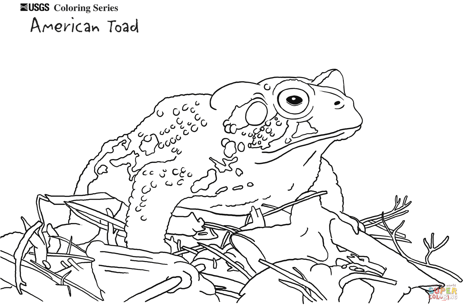 American Toad coloring #10, Download drawings