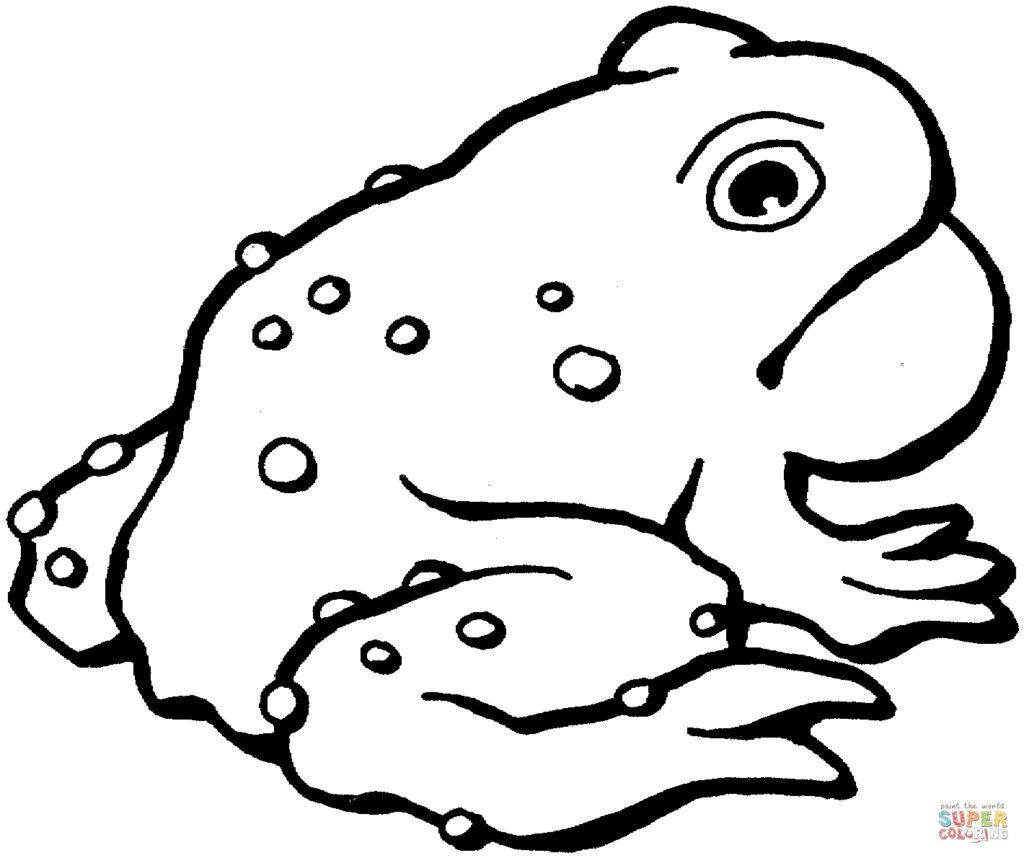 American Toad coloring #12, Download drawings