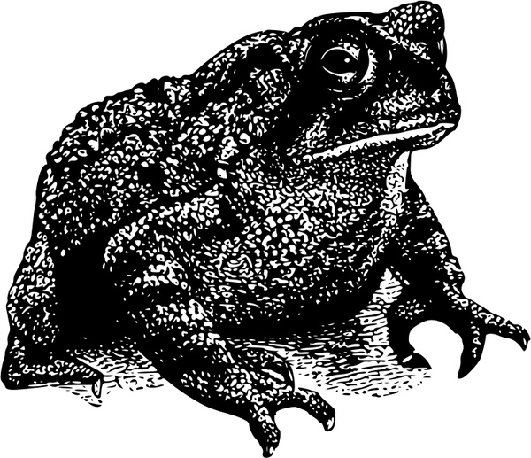 Cane Toad svg #19, Download drawings