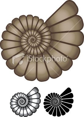 Ammonite clipart #12, Download drawings