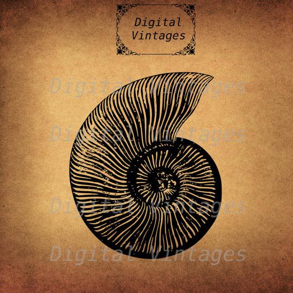 Ammonite svg #14, Download drawings