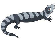 Amphibian clipart #20, Download drawings