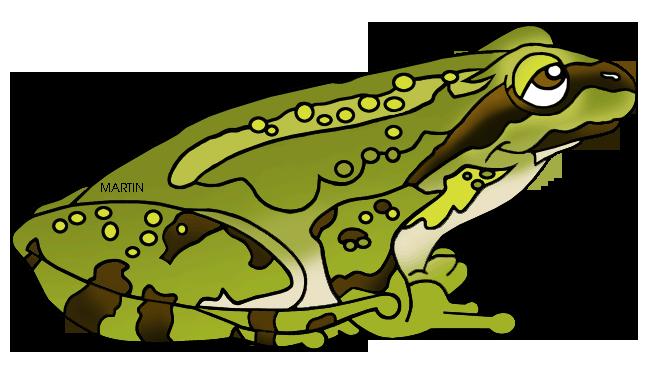 Amphibian clipart #7, Download drawings