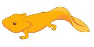 Newt clipart #20, Download drawings
