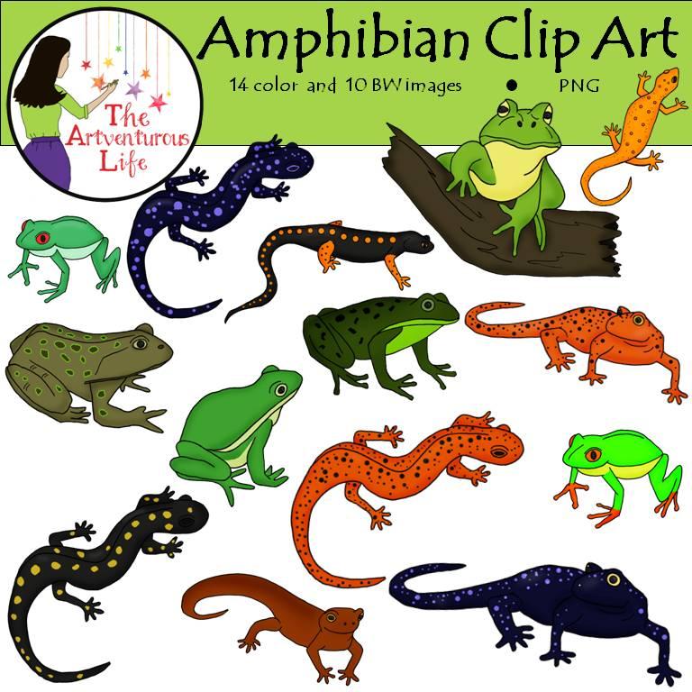 Amphibian clipart #15, Download drawings