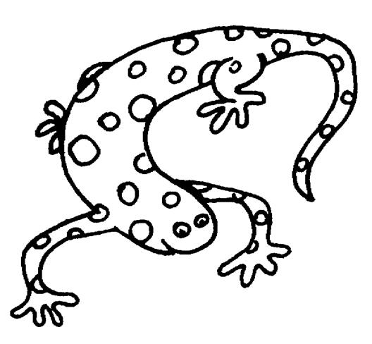 Salamander coloring #6, Download drawings