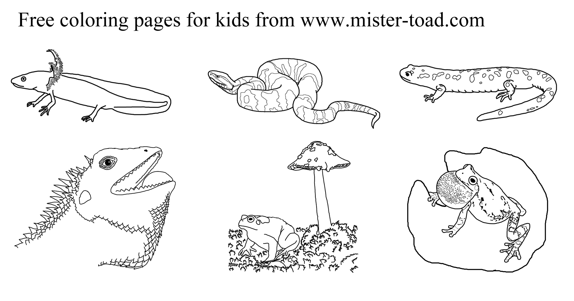 Coloring pages of amphibians and reptiles ~ Amphibian coloring, Download Amphibian coloring for free 2019